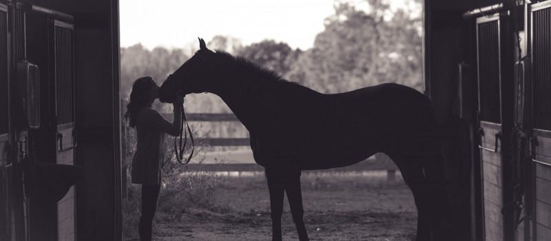 (CUENTO) El caballo de Milton Erickson